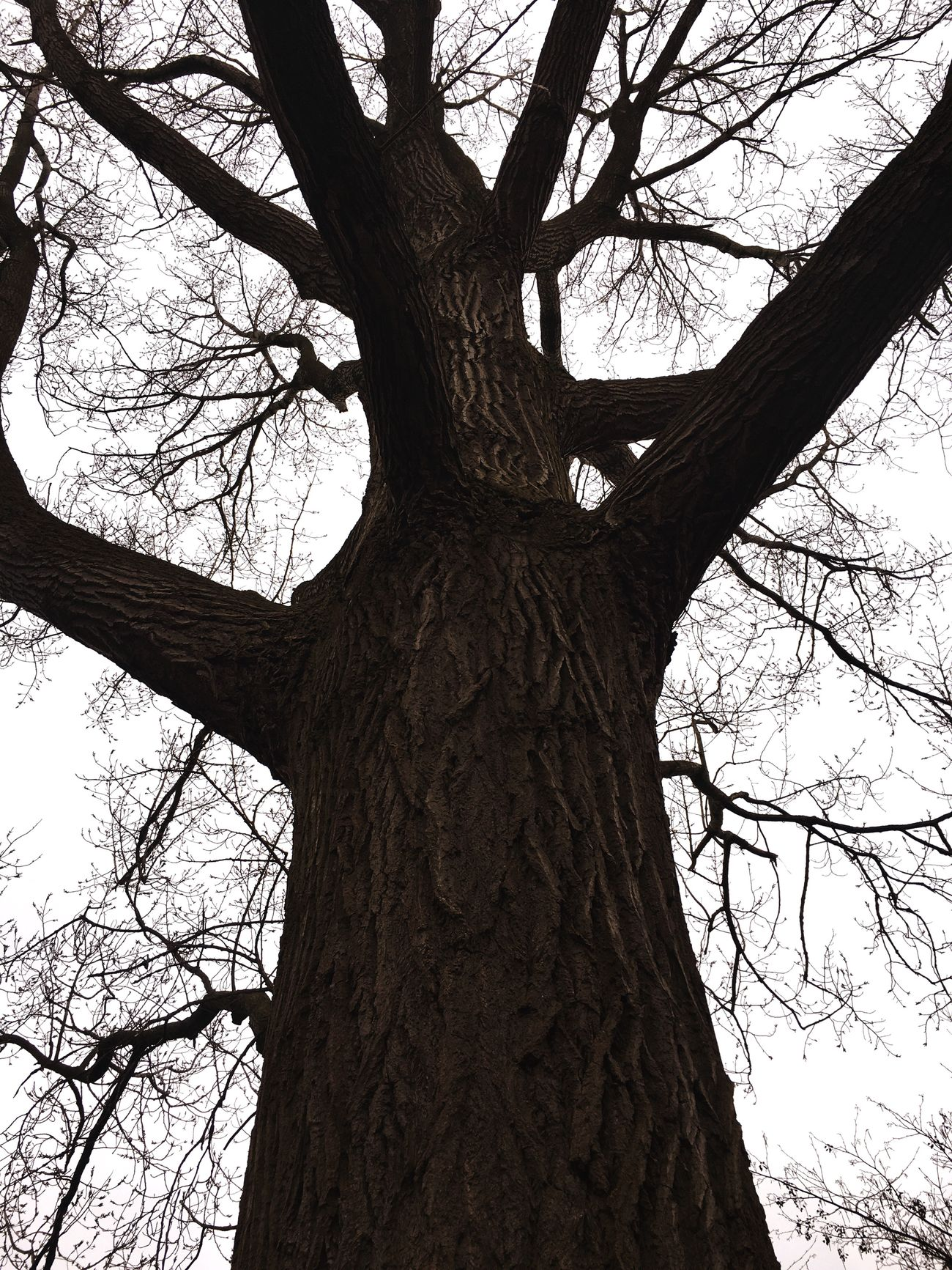 Up In The Air Trees Old Trees Look Up! Nature Photography Bigger Than I Love Trees