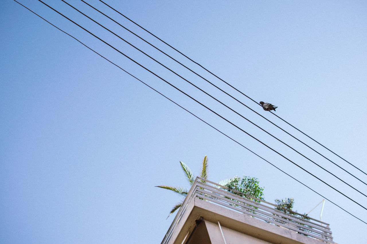 Architecture Blue Building Exterior Built Structure Cable Clear Sky Connection Day Low Angle View Nature No People Outdoors Pigeon Plants Power Line  Power Supply Rooftop Terrace Minimalist Architecture The City Light