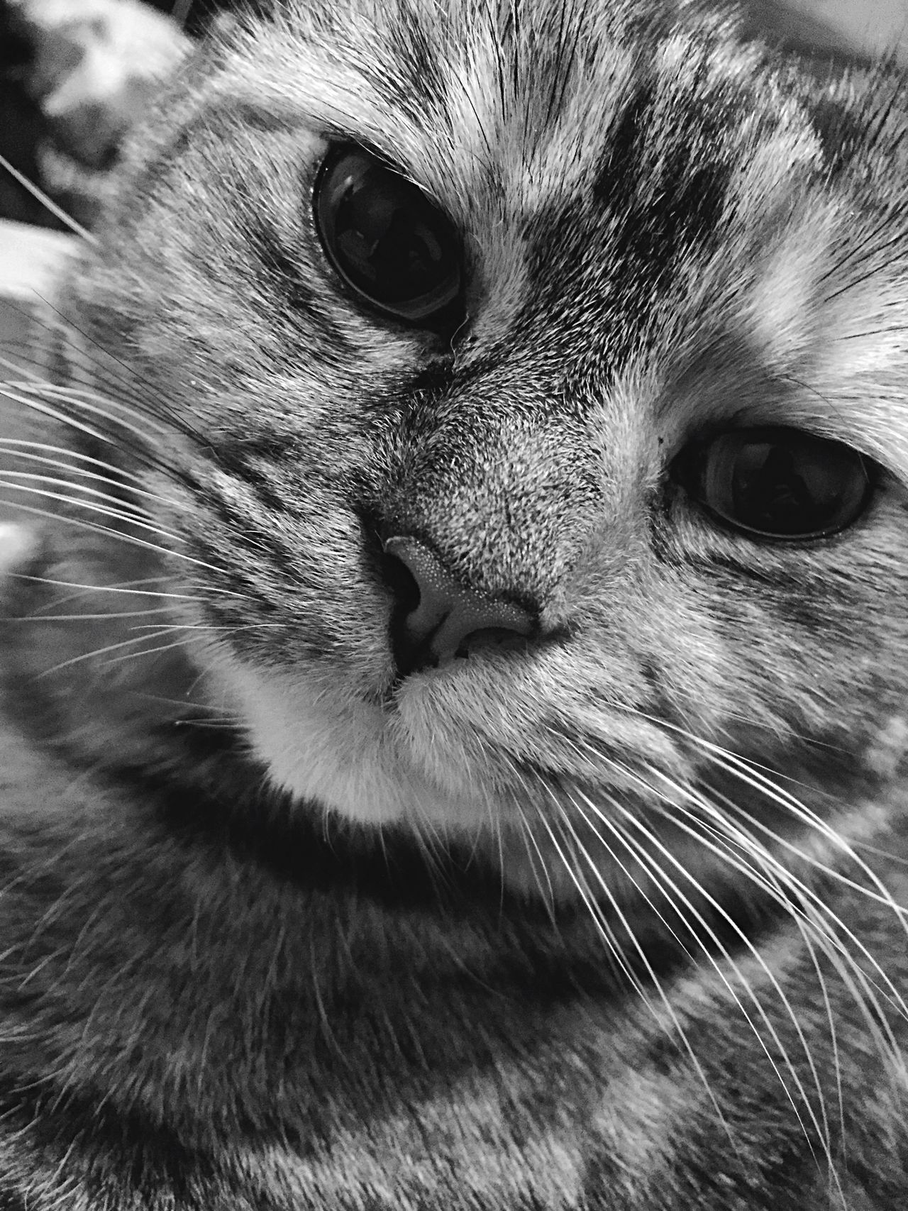 Yuri Cat Cat♡