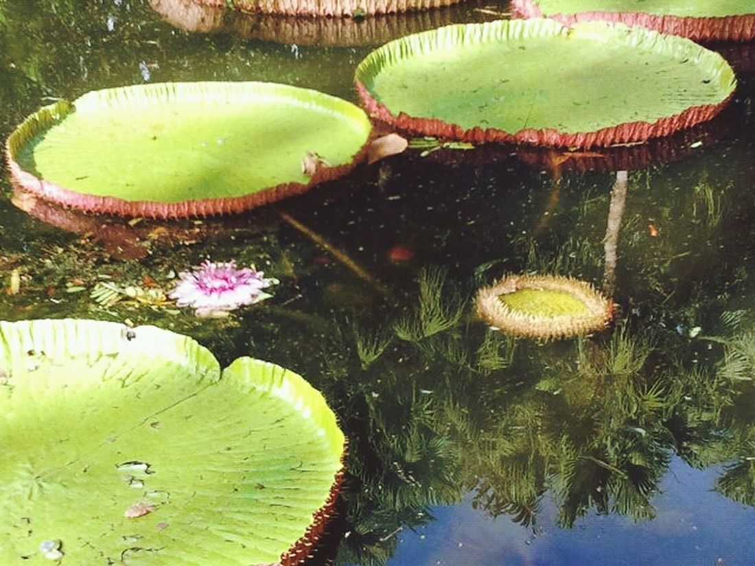 Flower Water Reflections Ninfee Lake