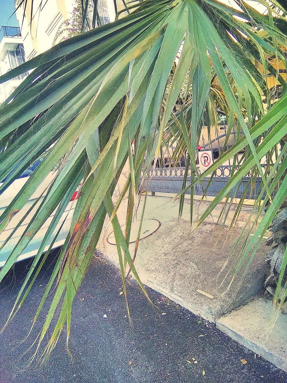 palm tree, day, outdoors, tree, no people, growth, nature, sky