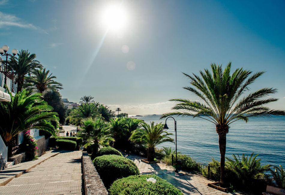 View of Eivissa promenade. Ibiza, Spain Balearic Islands Blue Sky City Coast Eivissa Ibiza Island Landscape Lush Foliage Mediterranean Sea Nature Palm Trees Promenade Scenery Sea Seaboard Seafront Seaside SPAIN Street Sun Town Travel Destinations Tropical Climate Walkway