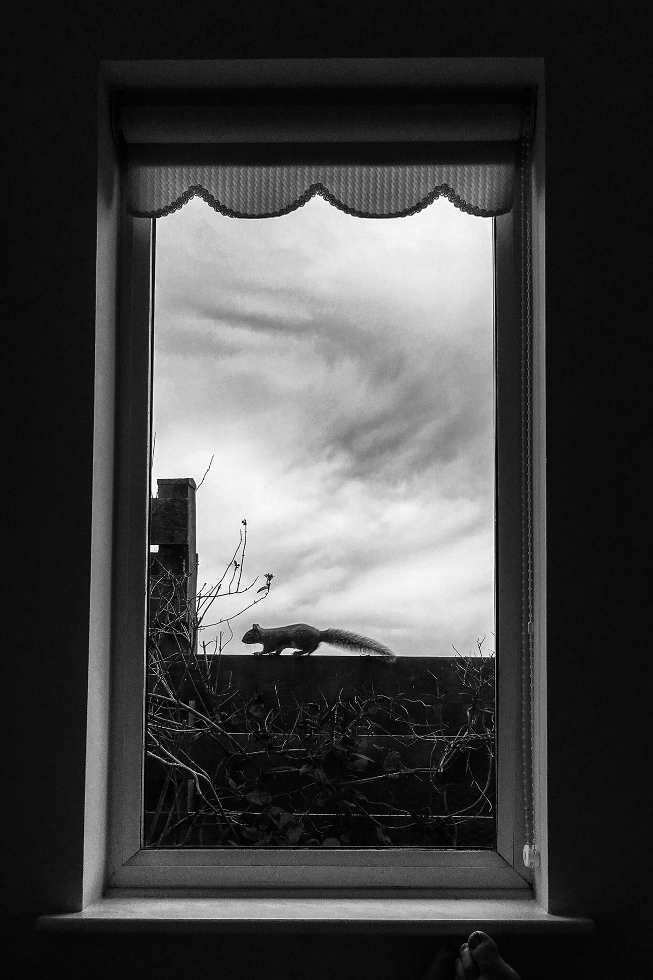 Window Sky No People Cloud - Sky Nature IPhoneography AMPt - My Perspective AMPt_community AMPt - Shoot Or Die TheMinimals (less Edit Juxt Photography) Iphoneonly Eye4photography  Blackandwhite Window Frame Eye4black&white  Taking Photos Black & White Shootermag