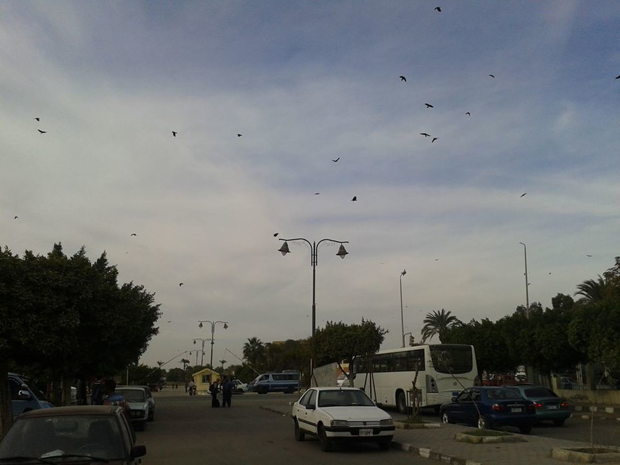 car, tree, sky, cloud - sky, land vehicle, bird, transportation, large group of animals, street, mode of transport, street light, animal themes, road, flying, built structure, outdoors, animals in the wild, day, architecture, nature, building exterior, city, no people