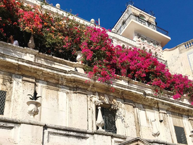 Architecture Building Exterior Flower Built Structure Low Angle View Outdoors Day No People Tree Growth Plant Fragility Freshness City