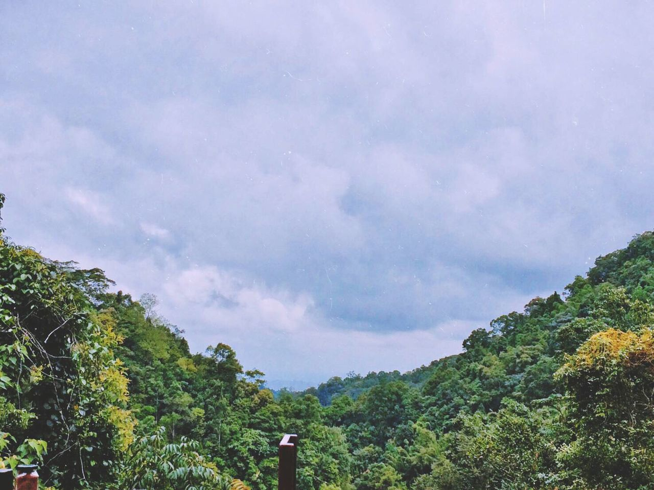 Changmai ChangmaiThailand Maekampong Tree Green Forest Sky Cloud Sky And Clouds Photo By Iphone5s Thailand Thailandtravel