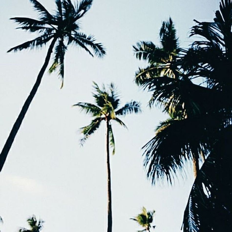 Summer throws heat☀ Vscodaily Posted Heat Coconut Trees Skyline Costabella Resort Lfl Fff Recentforrecent Strikes Photos Insatdaily Sun Summer Feed  Follow4followback