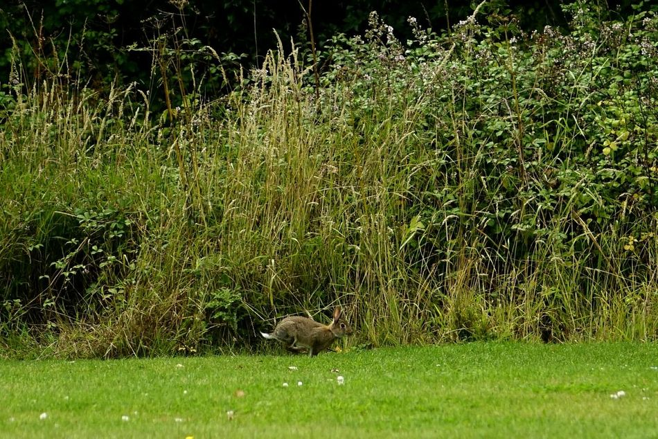 Cropped Bunny  Bunnyrabbit Rabbit Mr Rabbit Getting Inspired Peaceful Place Capturing Movement Life In Motion Colourful