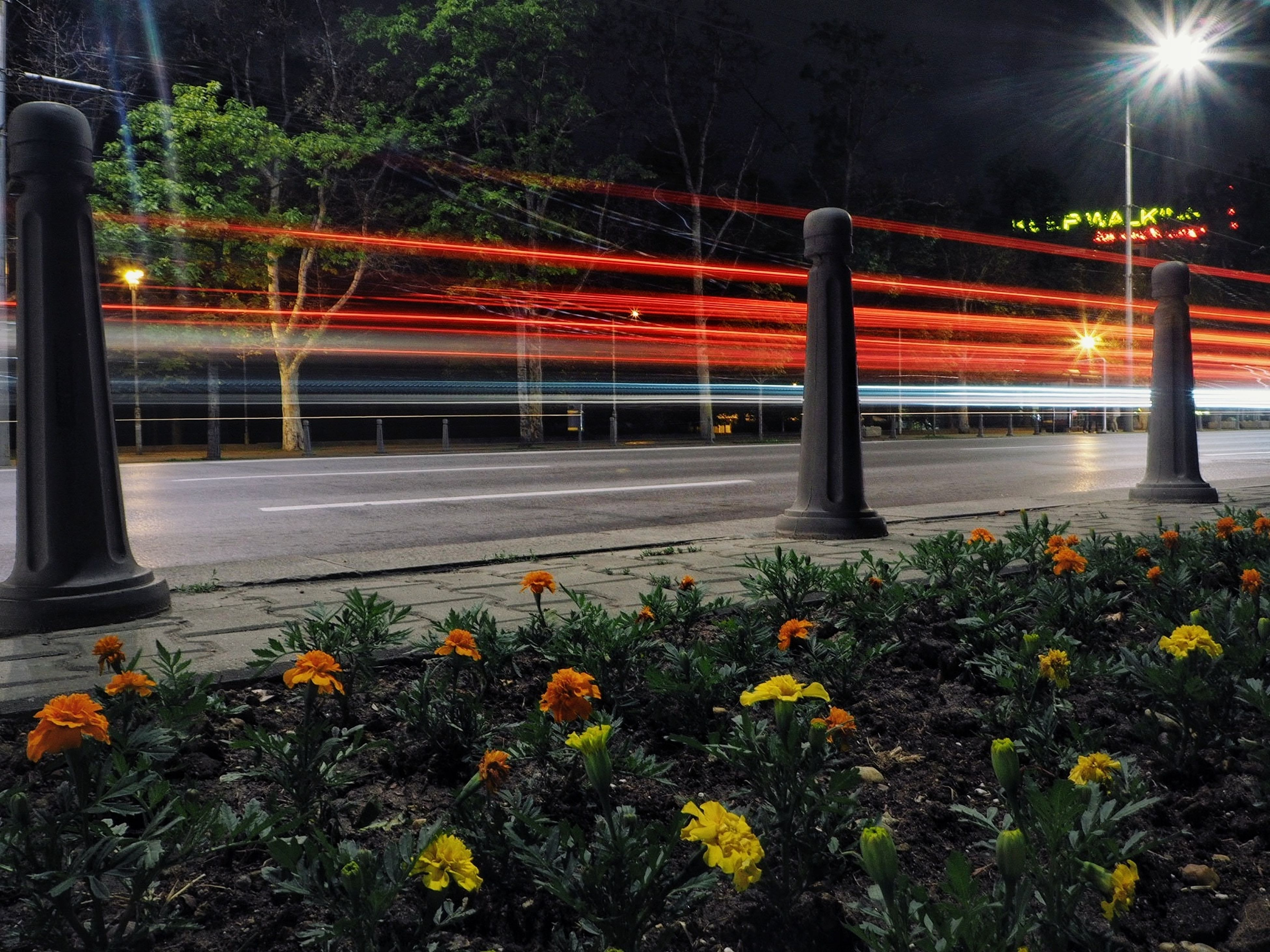 flower, illuminated, growth, nature, plant, outdoors, no people, night, beauty in nature, transportation, yellow, tree