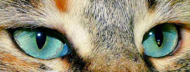 Mon Ami Le Chat Chat Cat Cat's Eyes Cats Of EyeEm CHATFIE Catfie Hello World