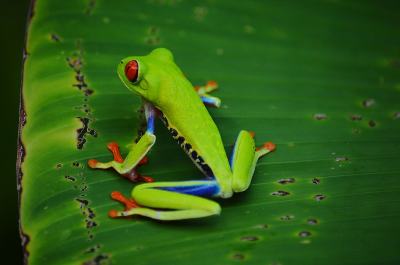 Beautiful stock photos of frog, , Animal Themes, Animals In The Wild, Beauty In Nature