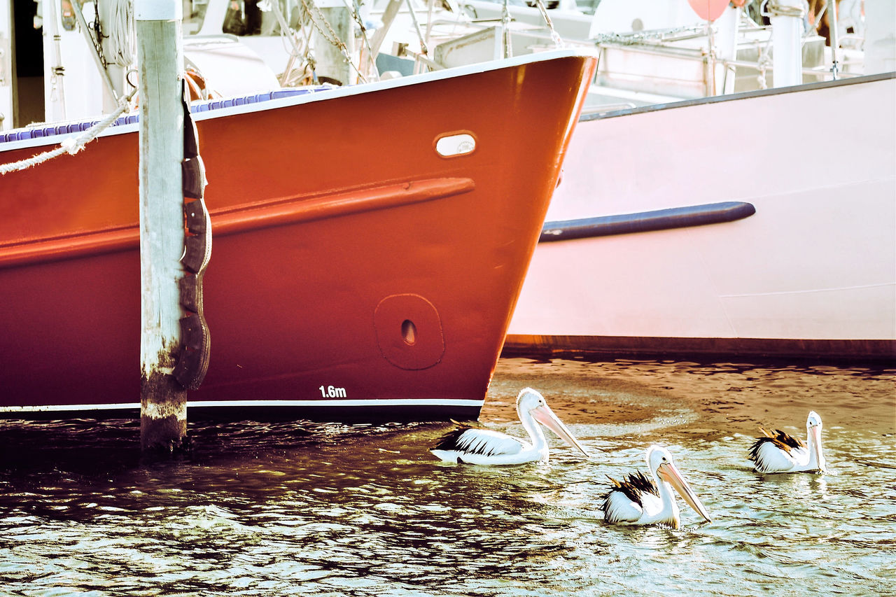 Lake Entrance, Australia Adapted To The City Birds In The City Day Fishing Boats Mode Of Transport Moored Nature Nautical Vessel No People Outdoors Pelicans Red Transportation Water