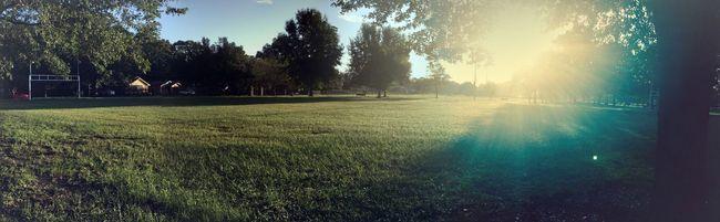 Sun rays in Green Fields Sunlight Grass Landscape Light Play Outdoors Sky Sun Sunrays Tree