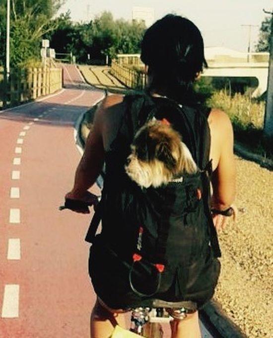 paseo en bici Bicycle Cute Pets Leo 🐶