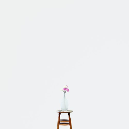 R O S E • Flowers Flower Collection Minimalism Minimalist EyeEm Best Shots - Minimalist Indonesia_photography Simple Beauty