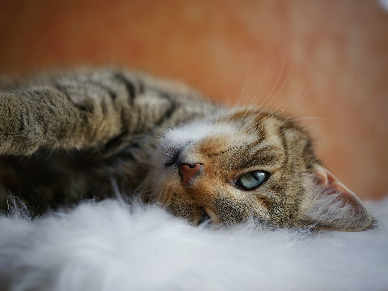 Beautiful stock photos of katzen, Animal Themes, Close-Up, Domestic Animals, Domestic Cat