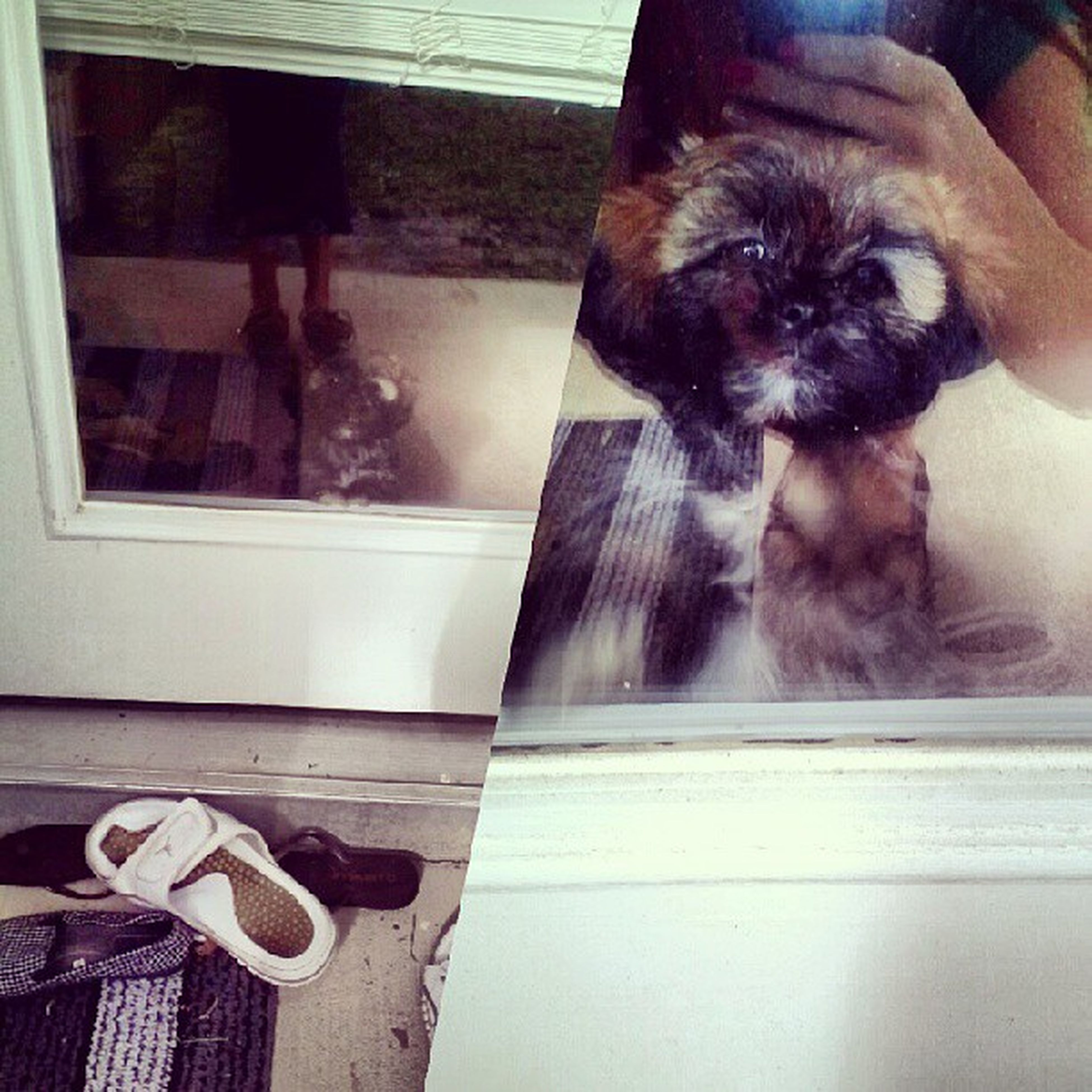 pets, domestic animals, animal themes, indoors, one animal, mammal, domestic cat, cat, dog, person, men, lifestyles, sitting, unrecognizable person, low section, pet owner, part of