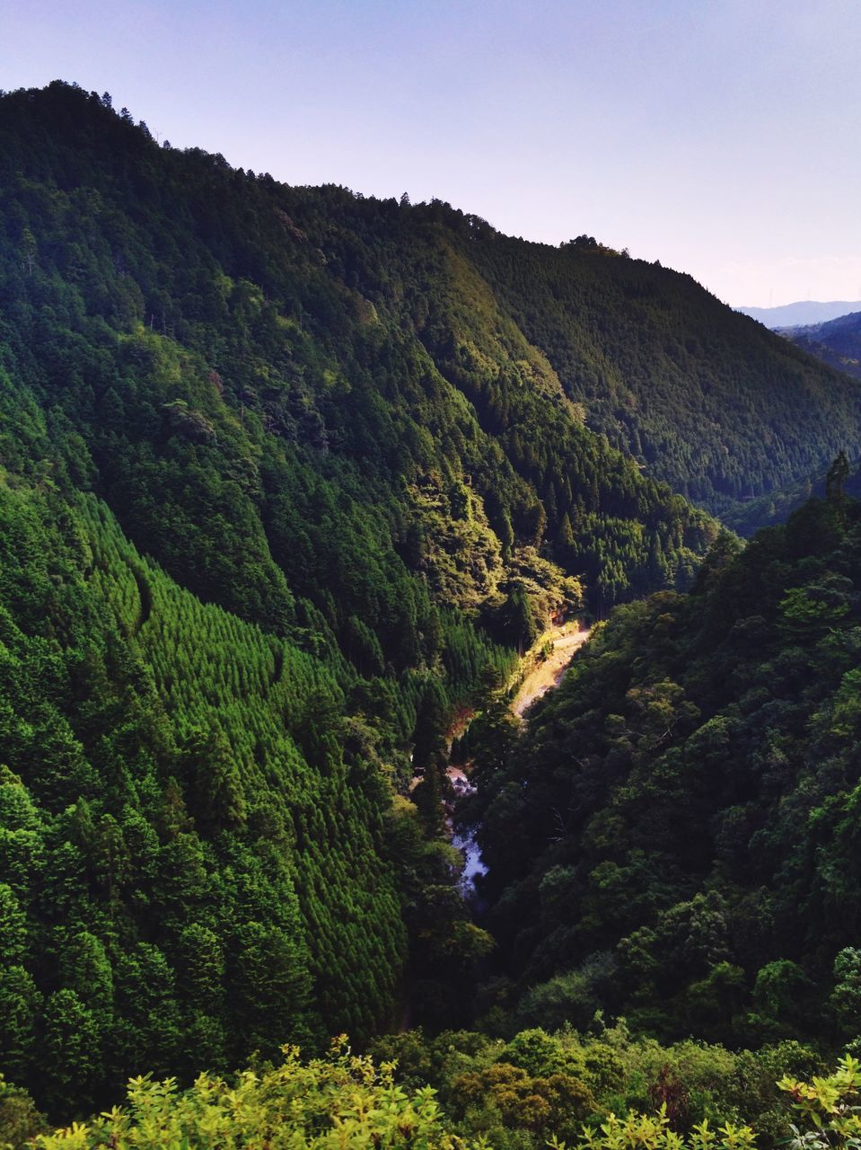 mountain, nature, beauty in nature, tranquility, tranquil scene, scenics, landscape, forest, lush foliage, mountain range, plant, tree, outdoors, day, growth, green color, no people, sky, tea crop