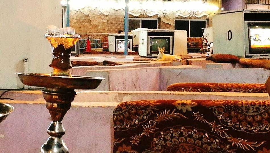 Colour Of Life Photo of Urban KSA life style. Taken on the HUAWEI P9 Shishasloungebar Hukkah Cat Watching