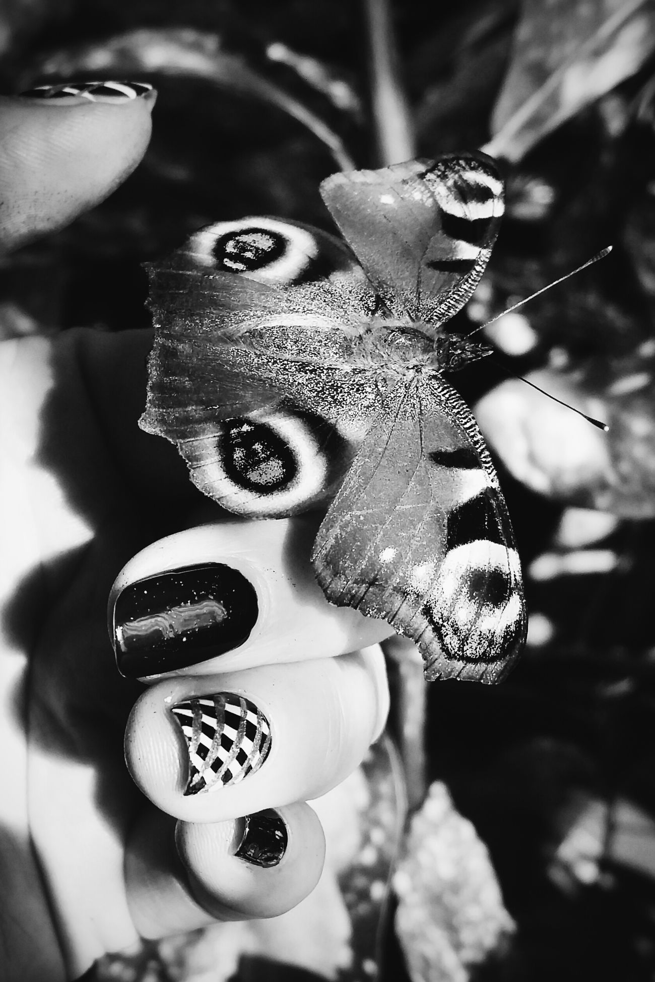 Black And White Blackandwhite Insect Photography The Five Senses