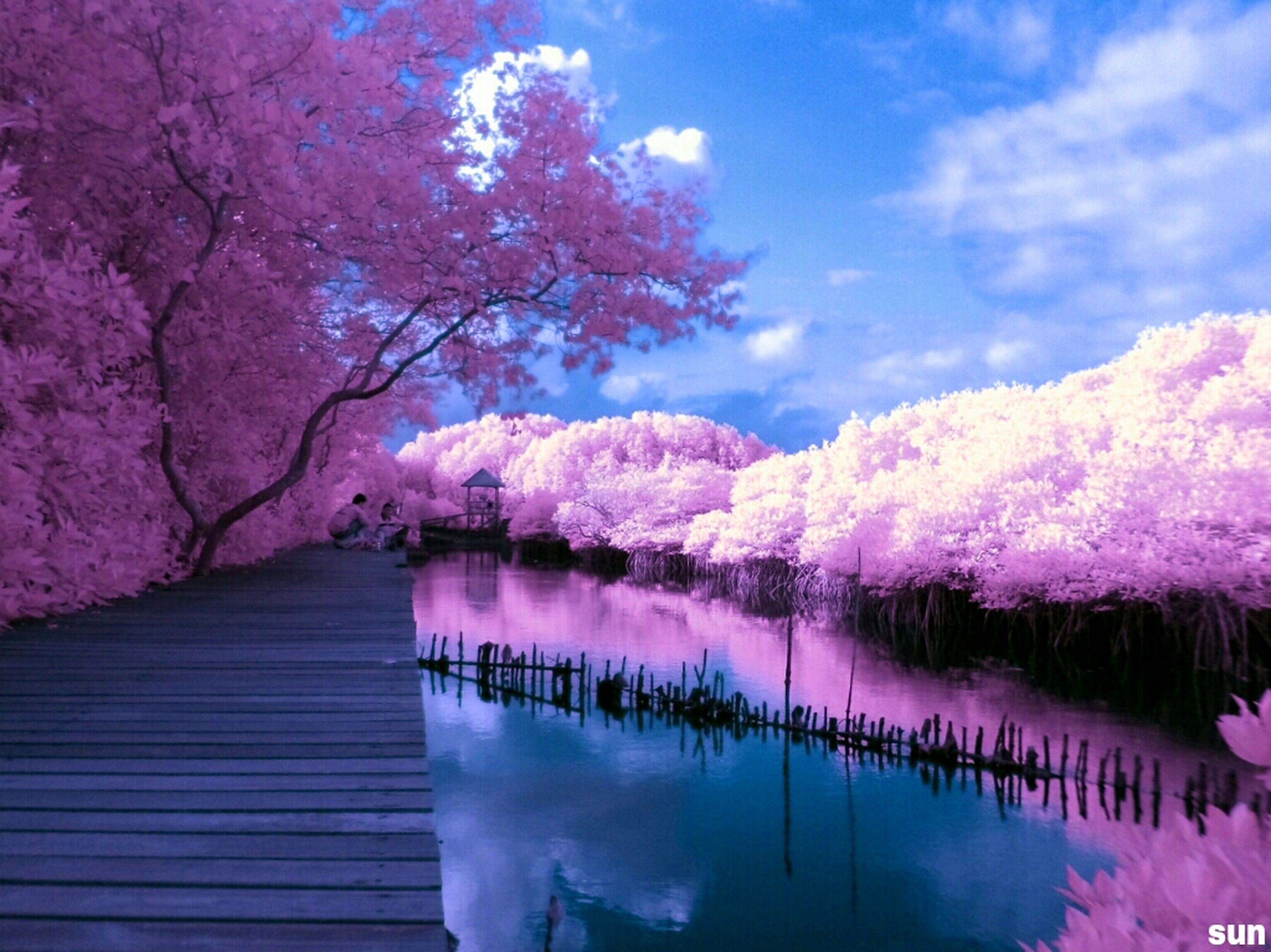flower, pink color, tree, water, beauty in nature, lake, nature, reflection, branch, purple, tranquility, freshness, growth, pink, tranquil scene, sky, blossom, fragility, scenics, outdoors