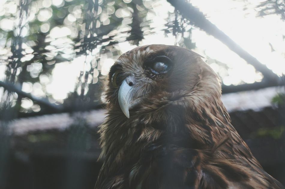 """even imperfection has its own ideal or perfect state"" Nature Photography Fave among all the pics i took First Eyeem Photo Nature_collection Animal Wildlife Animal Photography Animal_collection Imperfection Is Beauty Imperfection Beauty In Nature Owl Eyes Owl Photography Owl"