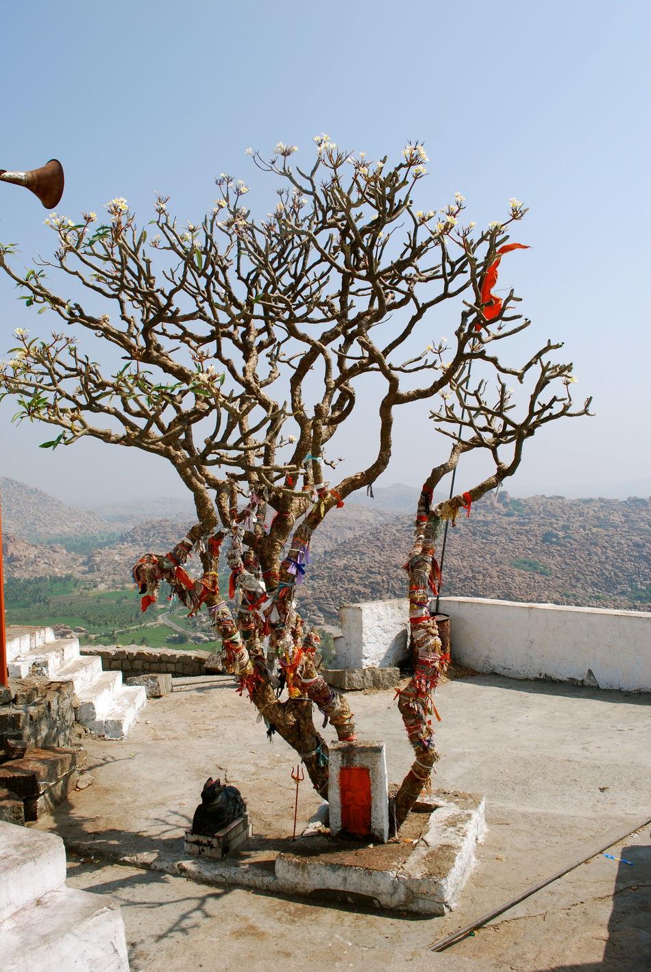 Beautiful stock photos of god, Bare Tree, Brown, Faith, Hanging