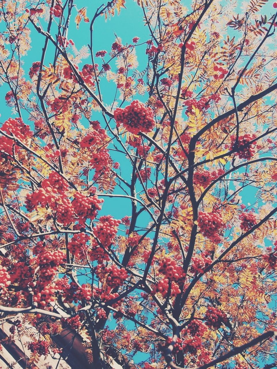 tree, beauty in nature, branch, low angle view, growth, nature, flower, blossom, no people, autumn, day, outdoors, springtime, tranquility, sky, scenics, fragility, backgrounds, freshness, close-up
