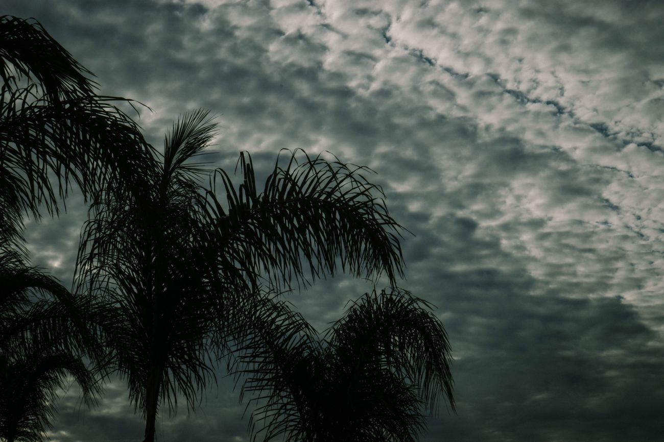 Cloud - Sky Silhouette Scenics Outdoors Palm Tree Supremeshooters Supremenyc Palace Supreme Sony A6000 Sony α♡Love Sonyalpha Sony