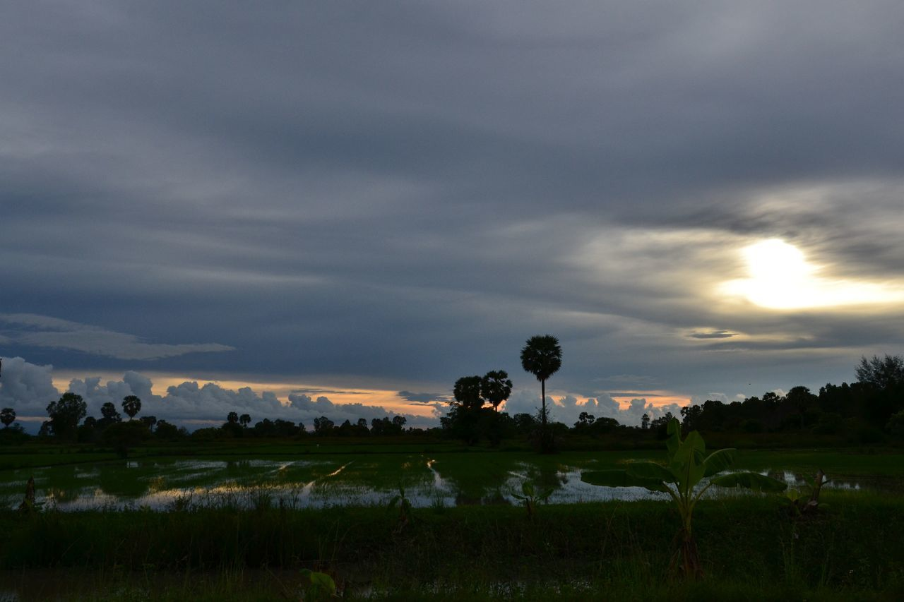 beauty in nature, nature, cloud - sky, tranquility, sky, field, tranquil scene, scenics, landscape, growth, outdoors, sunset, no people, tree, agriculture, rural scene, day, grass