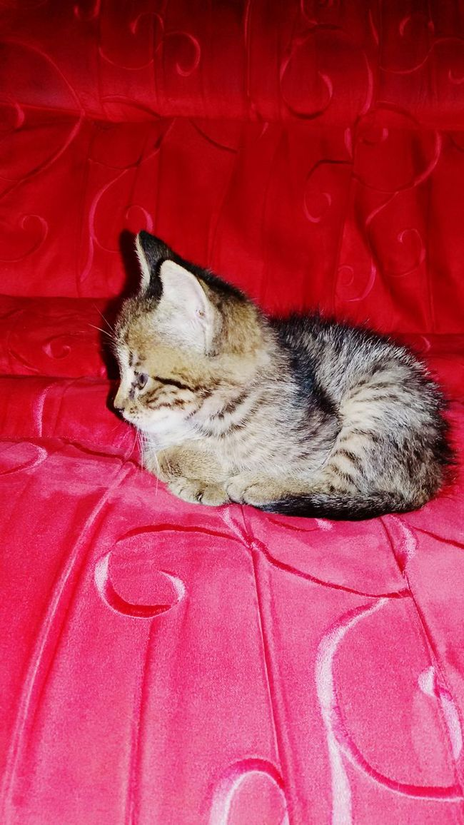 Domestic Animals One Animal Animal Themes Domestic Cat Pets Resting Relaxation Cat Red Animal Lying Down Babycat
