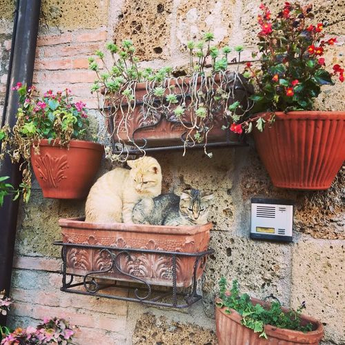 Potted Plant Plant Architecture Day Growth Building Exterior Flower No People Built Structure Outdoors Mammal Animal Themes Domestic Animals Stuffed Toy Pets Window Box