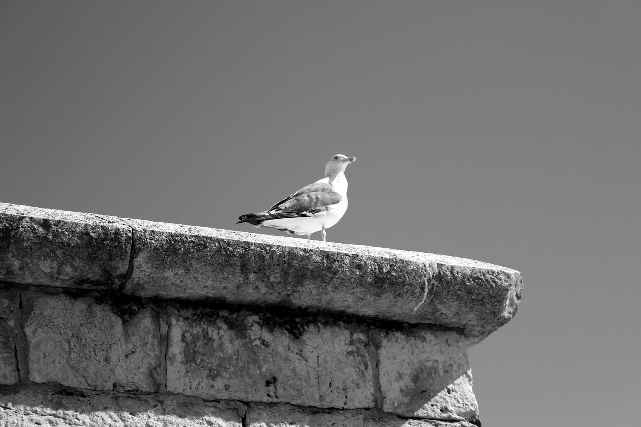 Seagull Stone Wall Bird Photography Birds_collection Minimalism Black And White EyeEm Nature Lover Eyeemphotography Eye4photography  EyeEmBestPics Black & White EyeEm EyeEm Best Shots Sky And Clouds Taking Photos Baia De Cascais Portugal Learn & Shoot: Simplicity Showcase: November