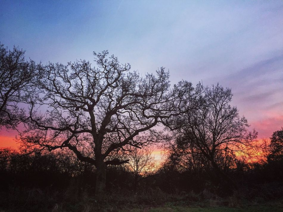 Nature Tree Sky Sunset Outdoors Evening Light Landscape Check This Out Beautiful Ferrymeadows Nene Park Silhouette Photography Photooftheday Evening Sky Peterborough Beauty In Nature Nature Idyllic Taking Photos
