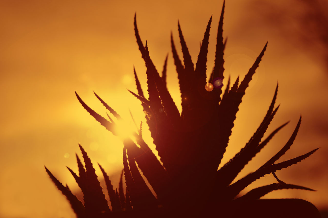 Plant Growth Sunset Silhouette Nature Sunbeam Close-up No People Outdoors Sky Day Patches Of Sunlight Sunlight Sunny Day Tonight Decline Cactus Red And Yellow Heat - Temperature Beauty In Nature Light And Shadow Sunshine Silhoutte Photography Silhouette_collection Summer