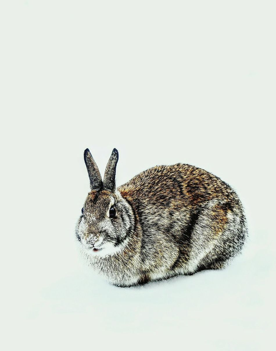 Beautiful stock photos of osterhasen, Animal Themes, Cold Temperature, Copy Space, Covering