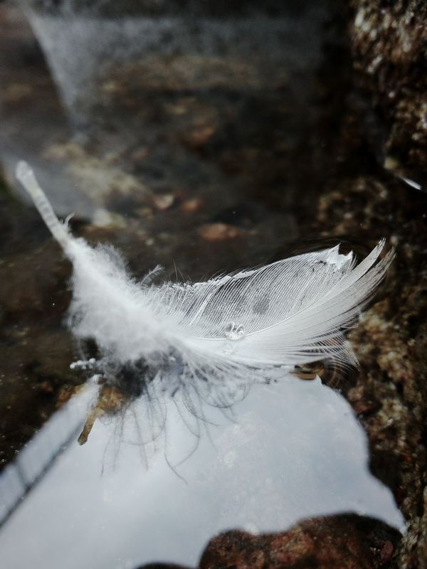 Feather  River Drops White Reflection Hard To Capture Wind Beautiful Day Afternoon Focused Mirror Effect Summertime Gentleness Easy Come, Easy Go. St Blasien Germany Nature Photography Photos With Words Huaweiphotography Eyeem Collection Nature_collection EyeEm Gallery Eyeem Market Focus Object Welcome Weekly Adapted To The City The Photojournalist - 2017 EyeEm Awards BYOPaper!