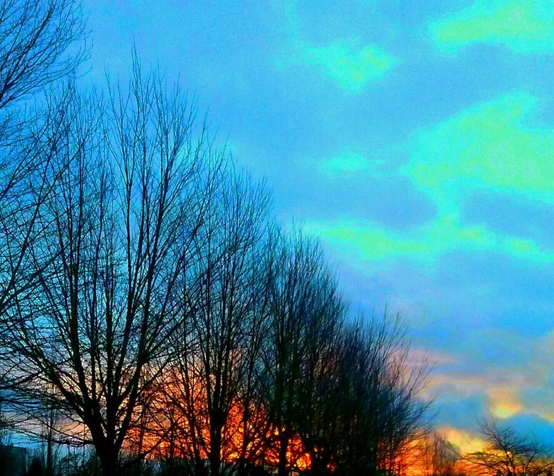 Tree Growth Outdoors Low Angle View Oregon Sunrise Vibrant Color Original Photography Sunrise Silhouette Sunrise_Collection Sunrise And Clouds Getty Images Fragility I Love Photograpy Cellphone Photography Bright_and_bold My Year My View Artistic Perception The Week On EyeEem Illuminated Textured  Freshness Idyllic Branch For The Love Of Art Silhouette