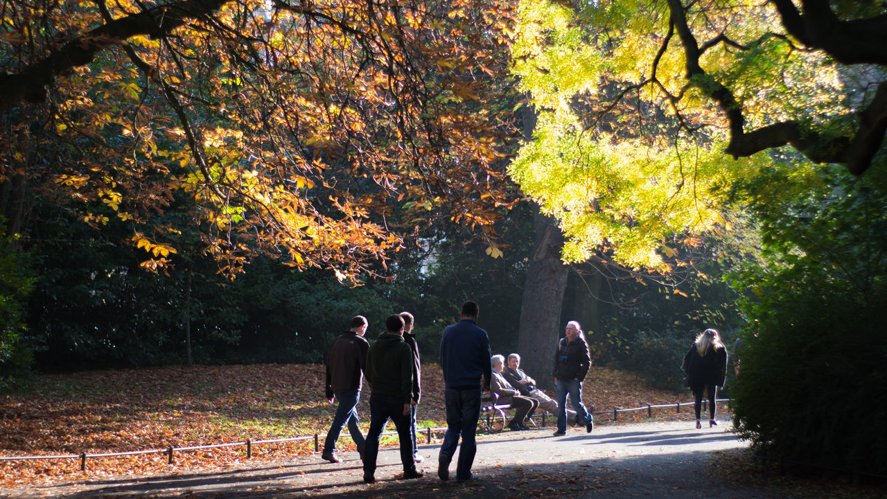 People Walking On Road By Trees At Park
