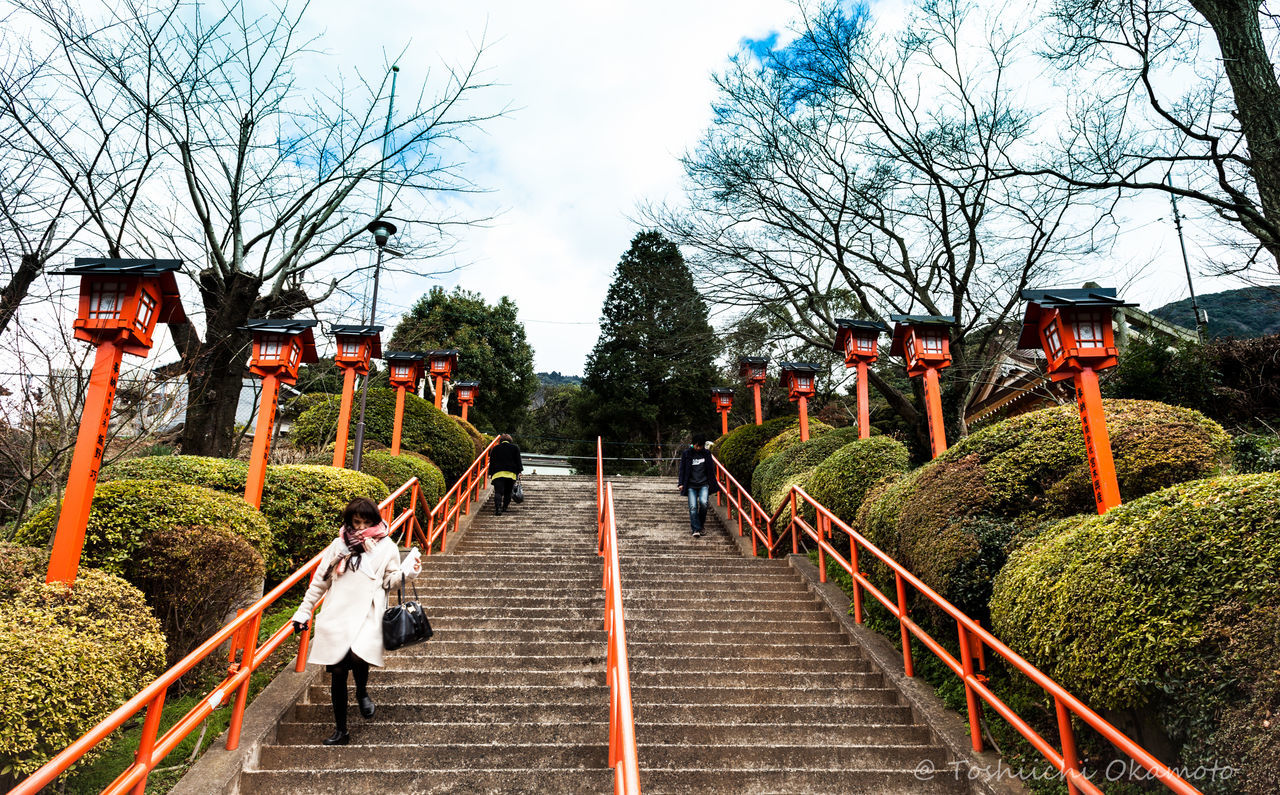 tree, steps and staircases, steps, railing, staircase, the way forward, bare tree, built structure, day, outdoors, architecture, sky, nature, no people