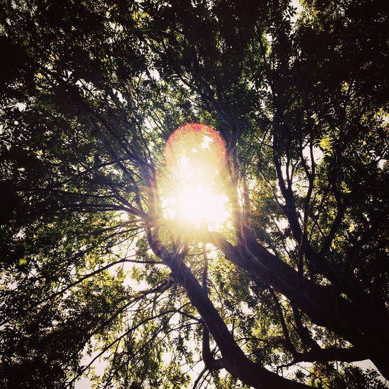 Sunlight Tree Tree Trunk Beauty In Nature