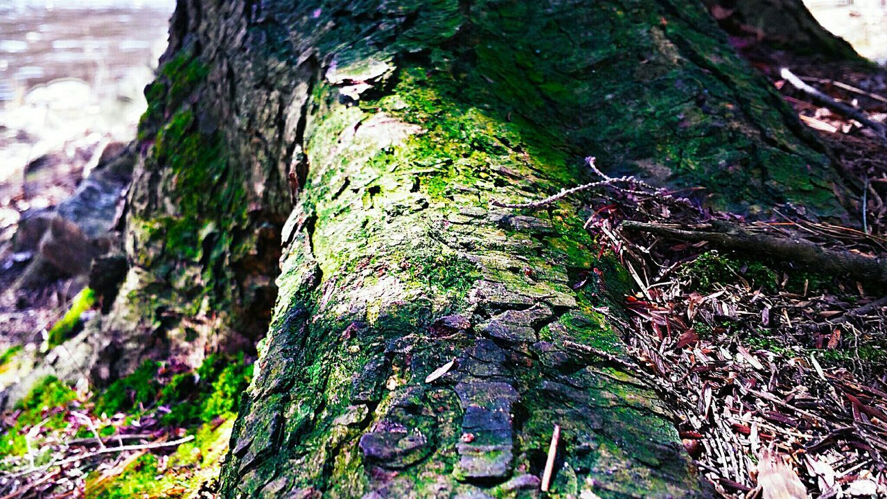 Reedited Woodtexture Hugging A Tree Tree_collection  Nature On Your Doorstep