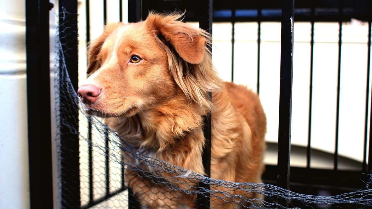 Dog Standing In Cage
