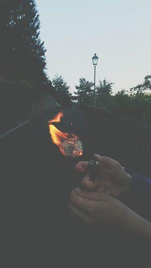 Pusteblume Feuer