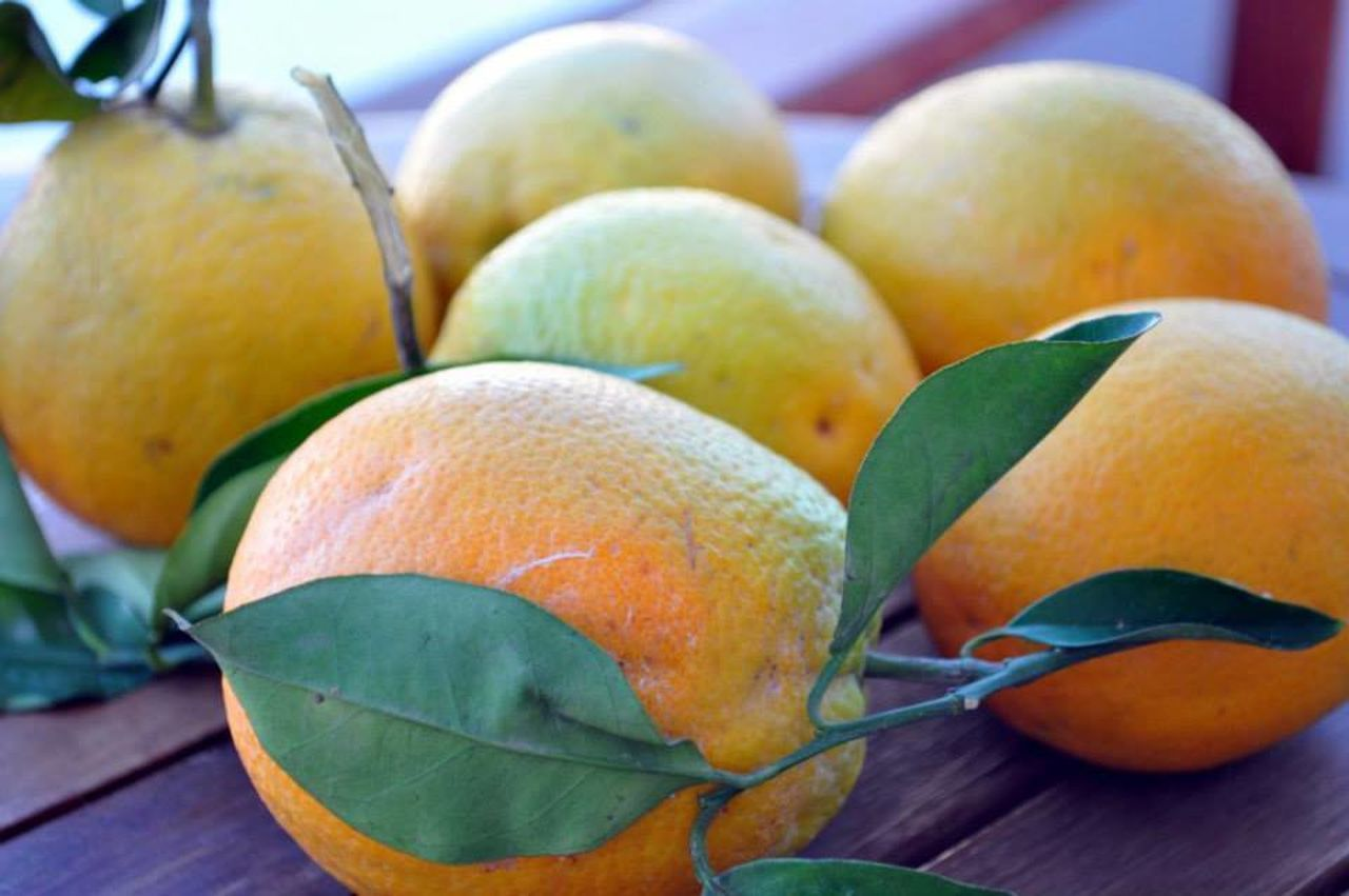 fruit, healthy eating, food and drink, freshness, food, close-up, citrus fruit, leaf, no people, focus on foreground, day, outdoors, nature