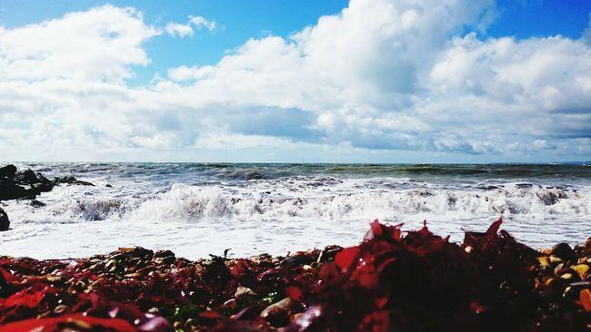 Beach Coast Waves Bartononsea