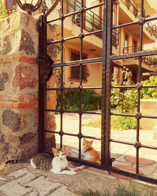 Taking Photos Cat Cats Catlovers Cute Cats Cats Of EyeEm Summertime Summer2015 Cat♡