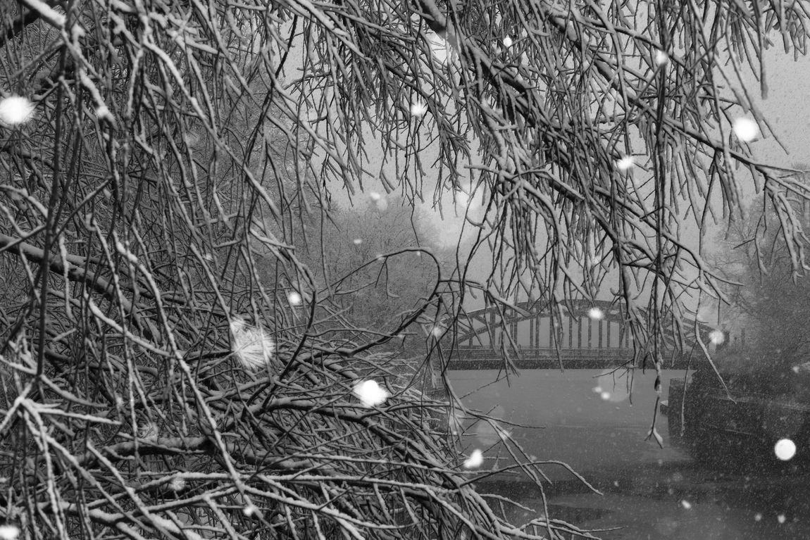 Sturmtief Frederike. Winter in the city with heavy snowfall. FUJIFILM X-T2 Fresh On Eyeem  Sturmtief Frederike Trees Weather Weather Phenomenon Winter Bare Tree Beauty In Nature Bough Branch Illuminated Nature No People Outdoors Sky Snow Snowfall Snowflake Water Shades Of Winter