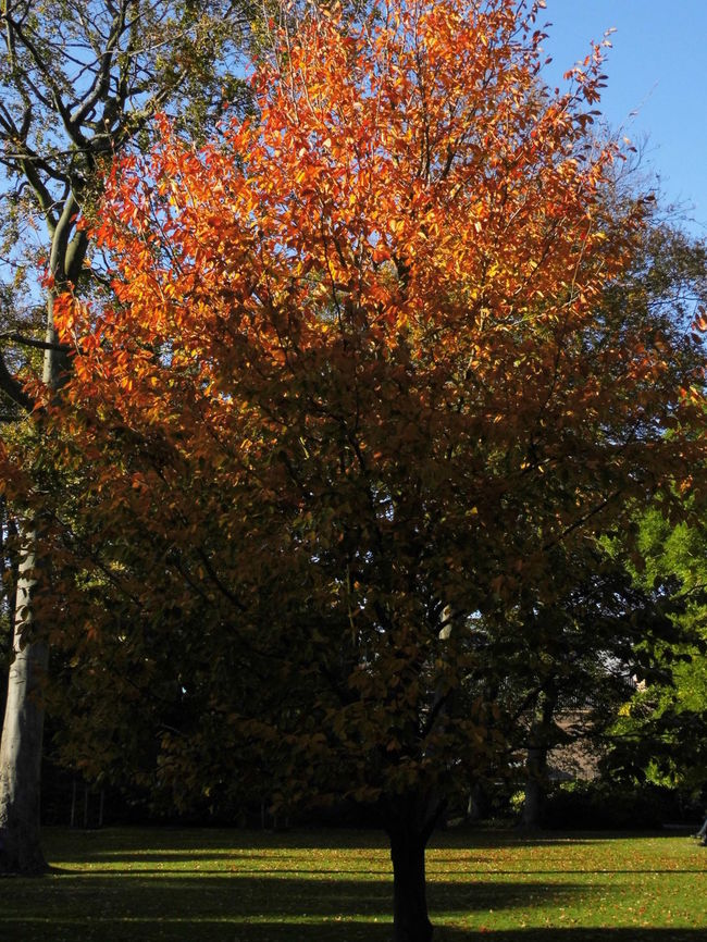 Autumn Beauty In Nature Branch Change Day Fall Beauty Grass Growth Nature No People Outdoors Paleistuin Denhaag Sky Tranquility Tree