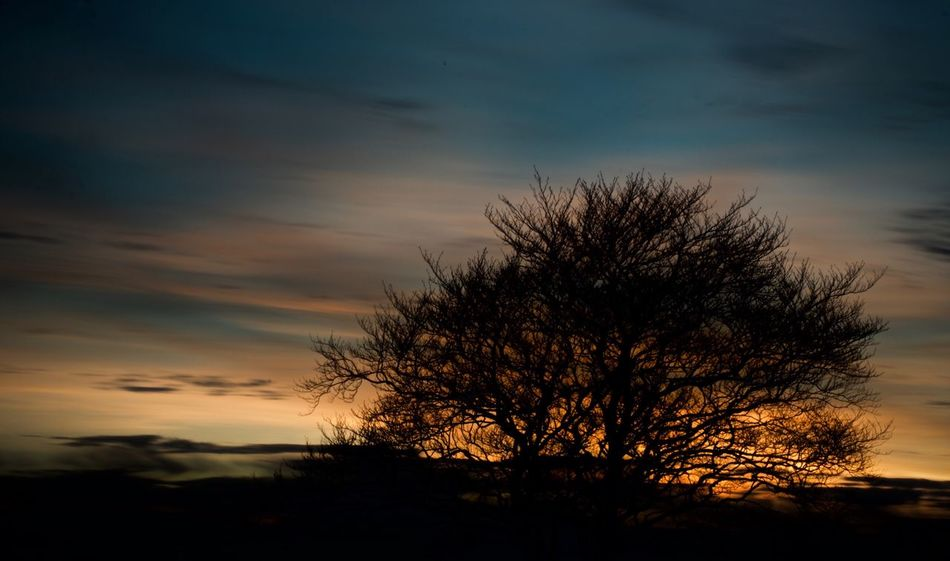 Tree Nature Beauty In Nature Sky Tranquility Sunset Tranquil Scene Scenics Silhouette Cloud - Sky No People Growth Branch Lone Outdoors Bare Tree Landscape Single Tree Golden Hour Sunset #sun #clouds #skylovers #sky #nature #beautifulinnature #naturalbeauty #photography #landscape Ireland Nireland